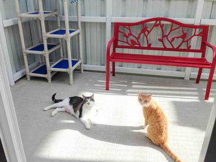 Casa Camano Animal Shelter Association